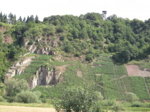 steepvines