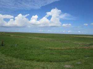 friesian landscape